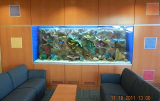 500 gallon children's hospital aquarium
