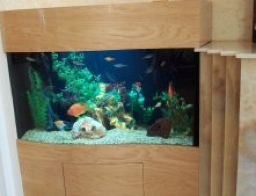 Custom acrylic wave front tank and cabinetry