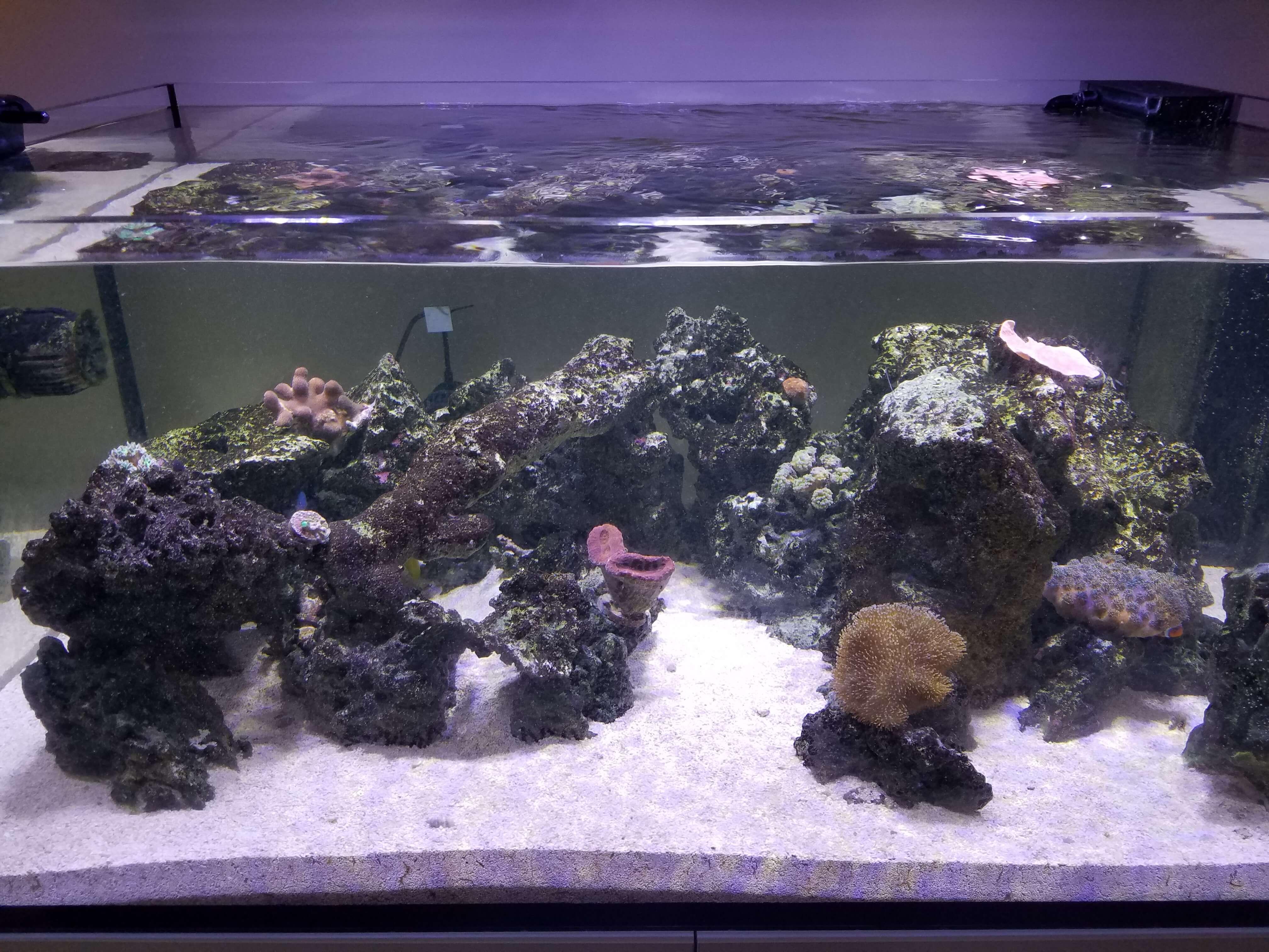 rimless reef tank