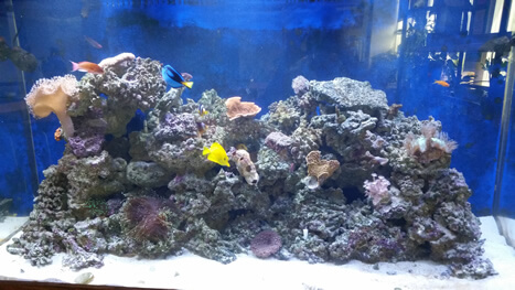 300 gallon Reef Tank