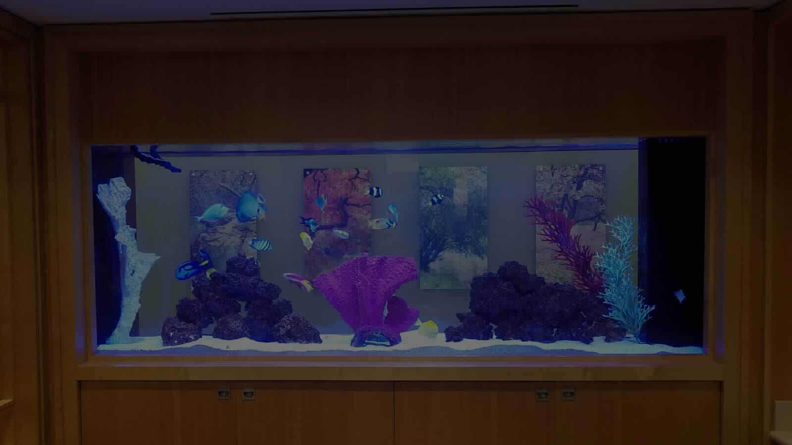 See Through Saltwater Aquarium