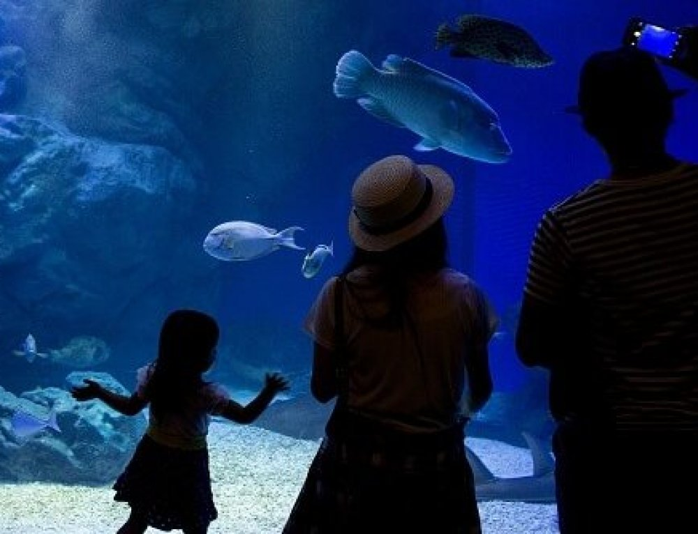 7 Reasons You NEED a Custom Aquarium