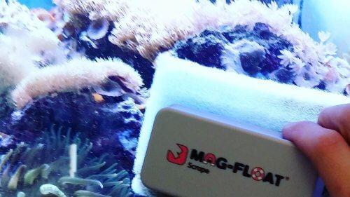 Aquarium Magnet