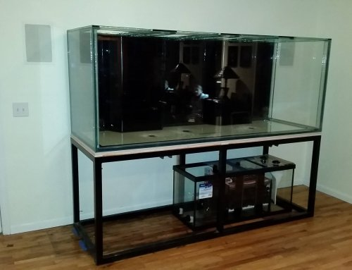 Installing a Custom Glass Aquarium – Day 1: The Tank Arrives