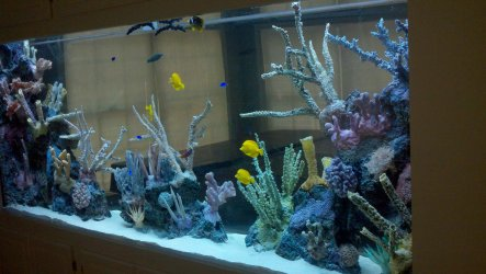 Aquarium Network – Custom Aquariums – Custom Aquarium Specialists ...