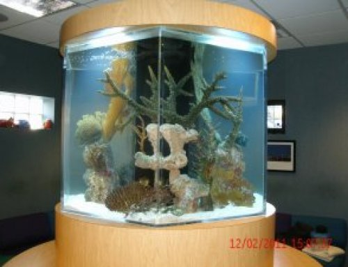 3 Things to Consider When Selecting a Fish Tank