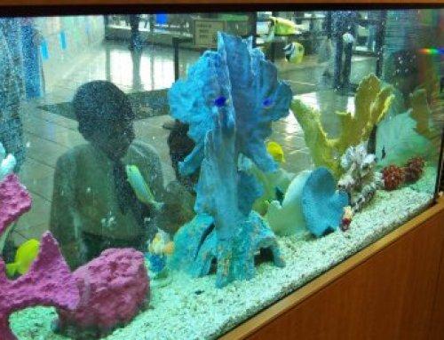 Hospital Aquariums
