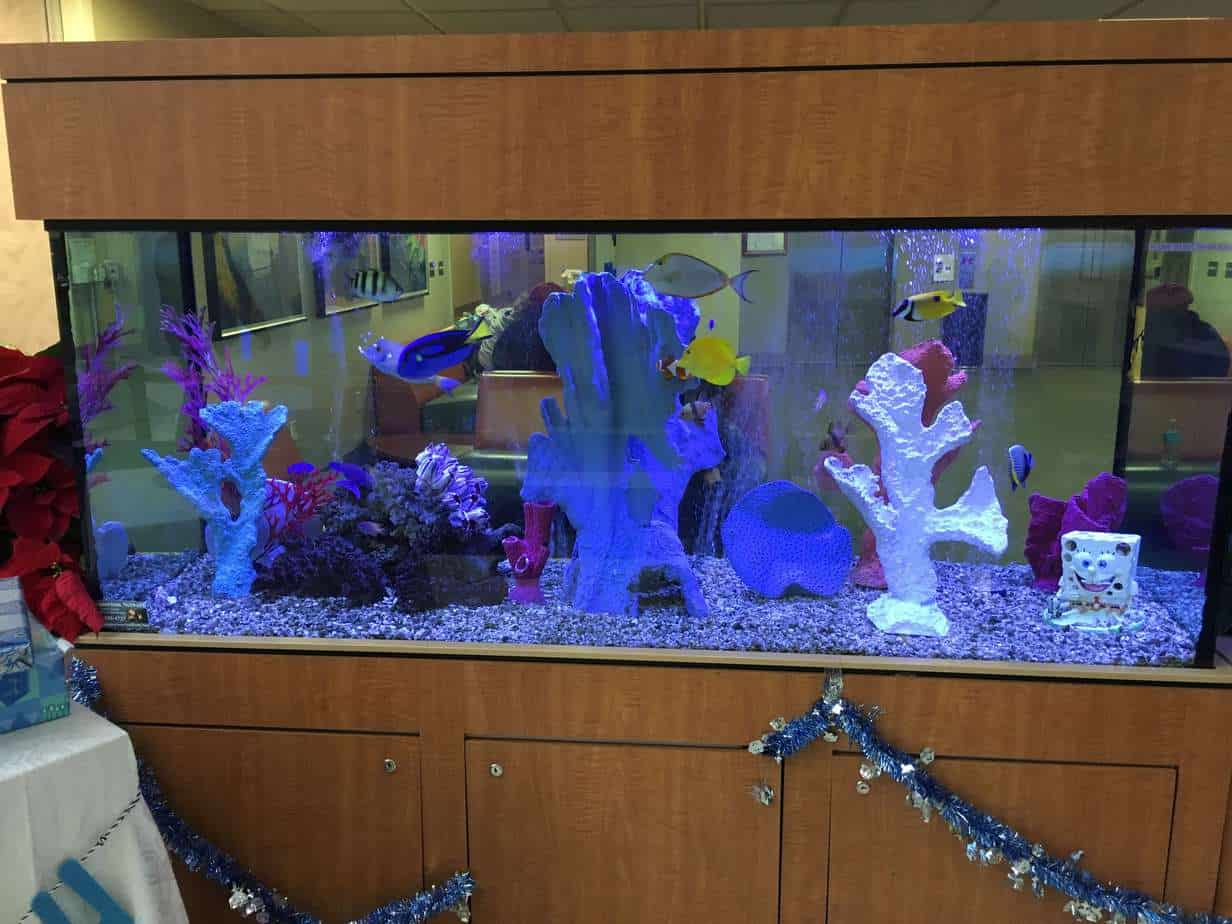 Hospital Lobby Aquarium