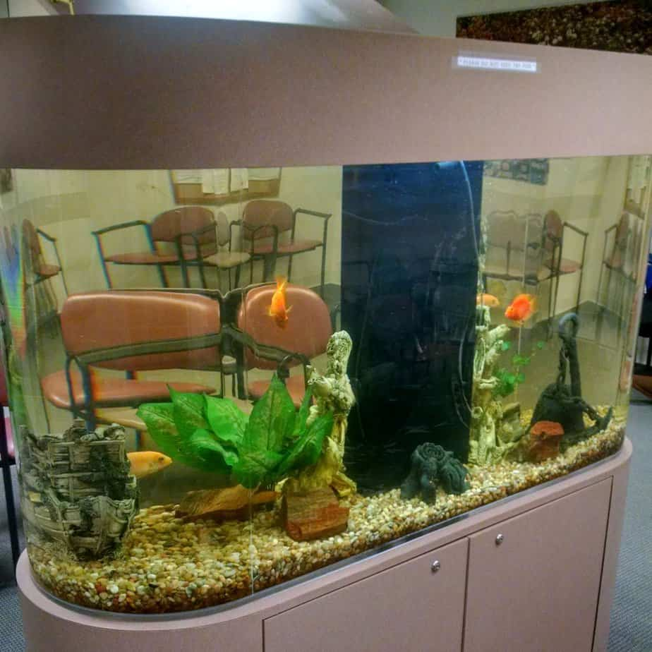 oval hospital aquarium