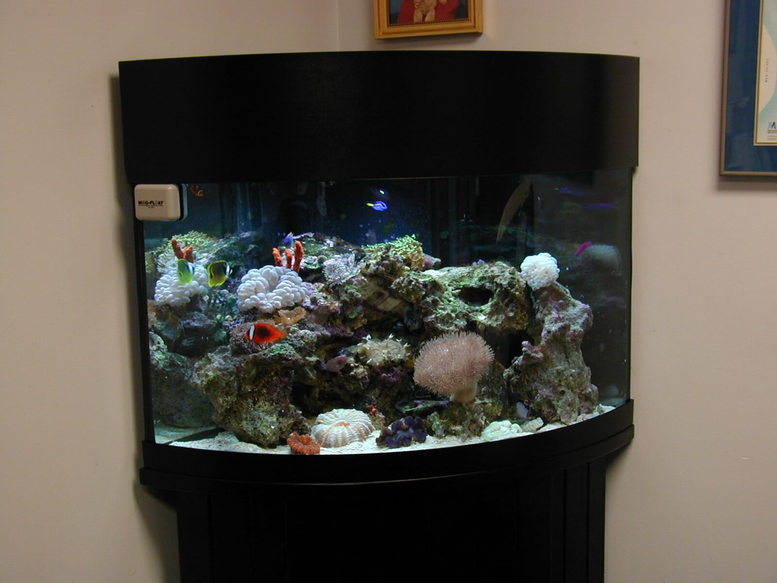 corner reef tank