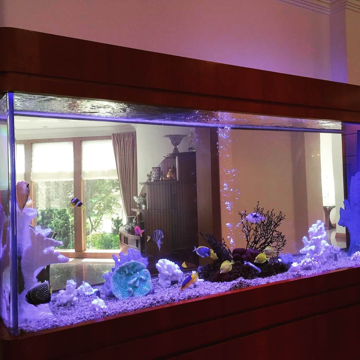 Custom See-Through Aquarium