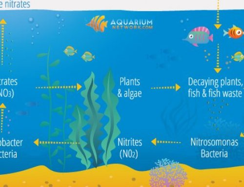 The Nitrogen Cycle in an Aquarium