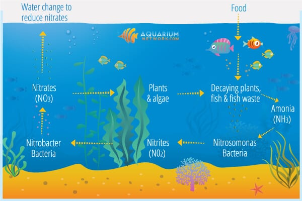 The Nitrogen Cycle In An Aquarium  U2013 Aquarium Network