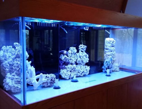 Installing a Custom Glass Aquarium – Day 2: Filtration