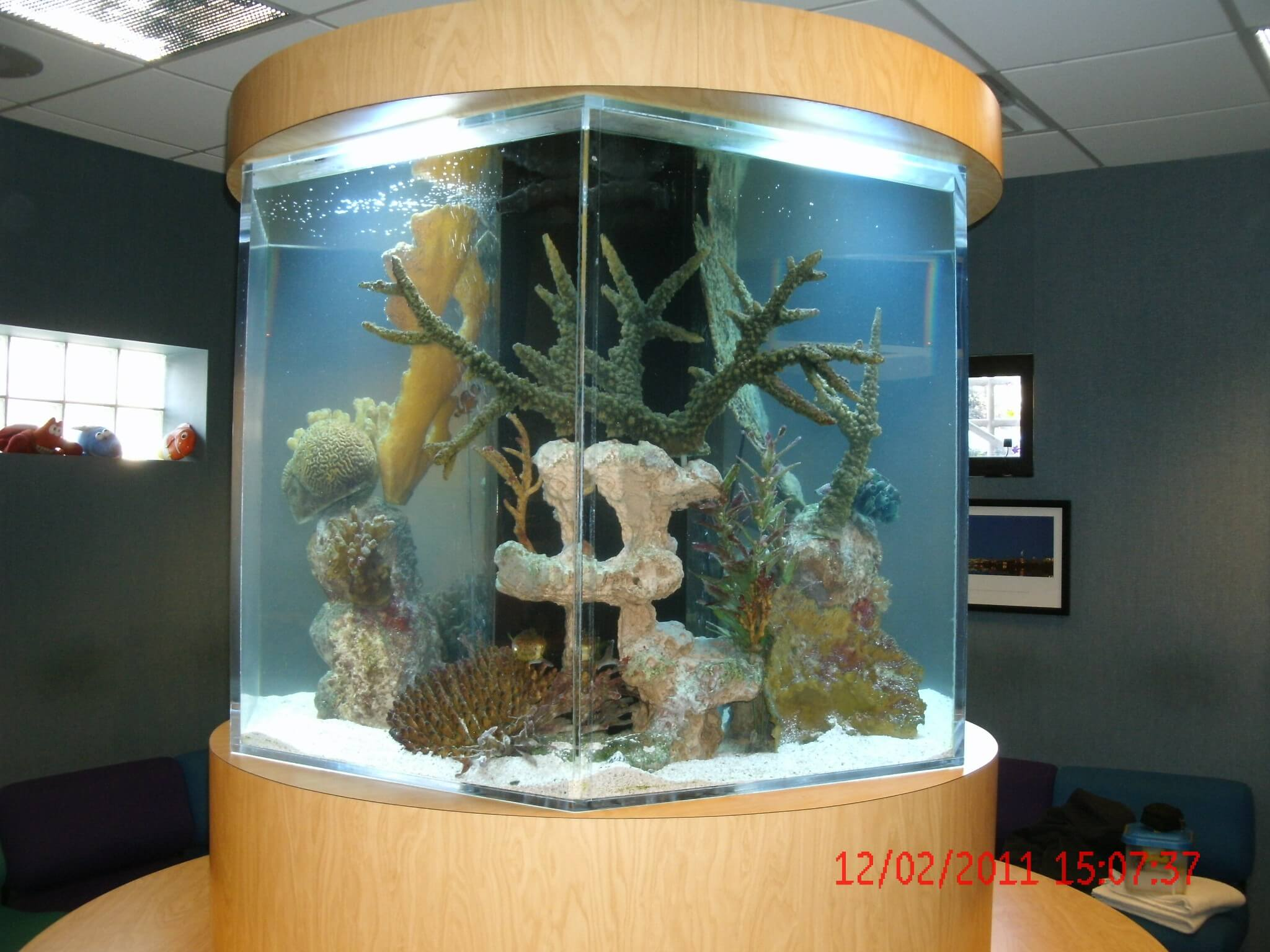 3 Things To Consider When Selecting A Fish Tank Aquarium Network Custom Aquariums