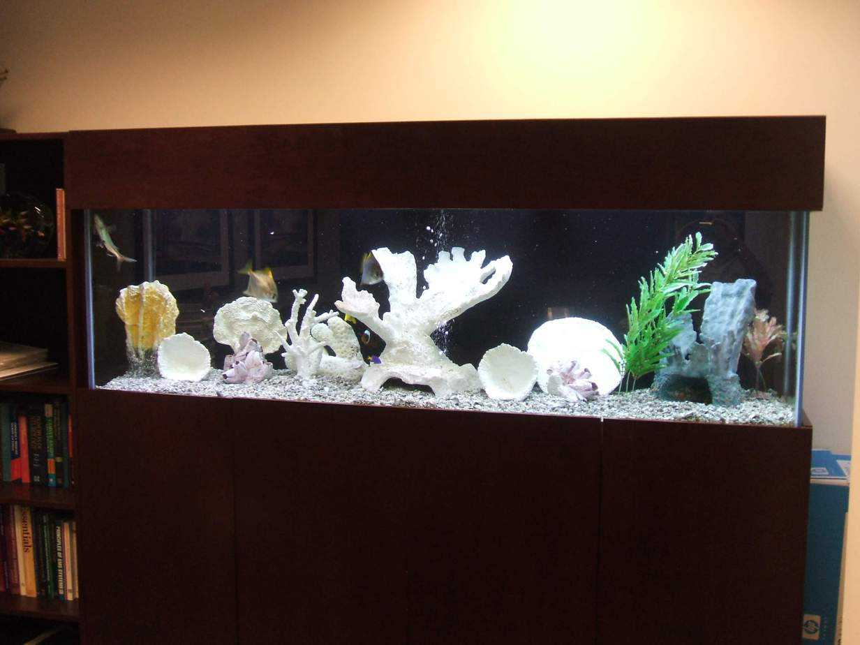 Hospital Conference room aquarium