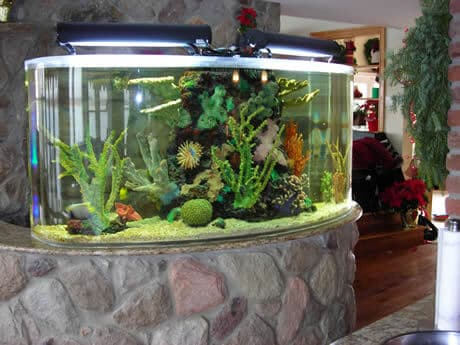 250 gallon aquarium long island