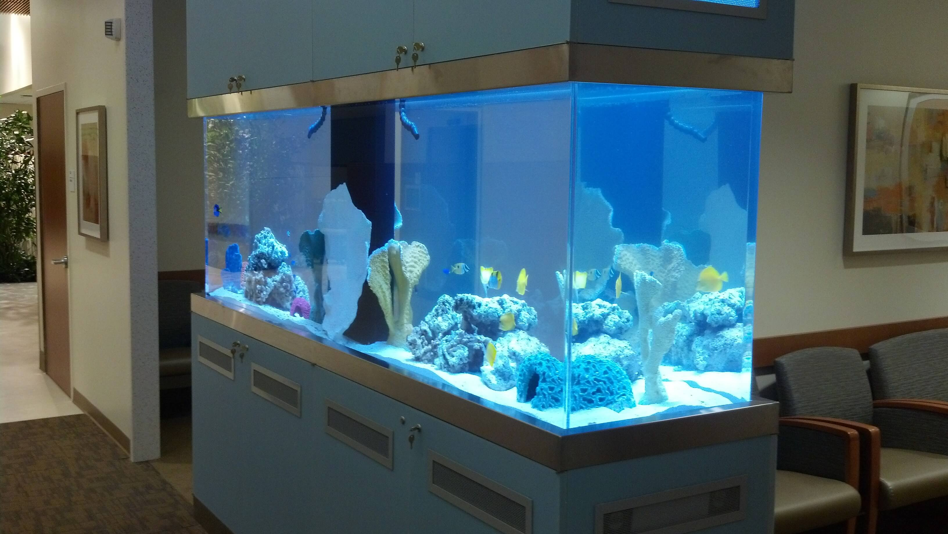 radiation oncology aquarium