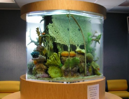Long Island Custom Aquariums