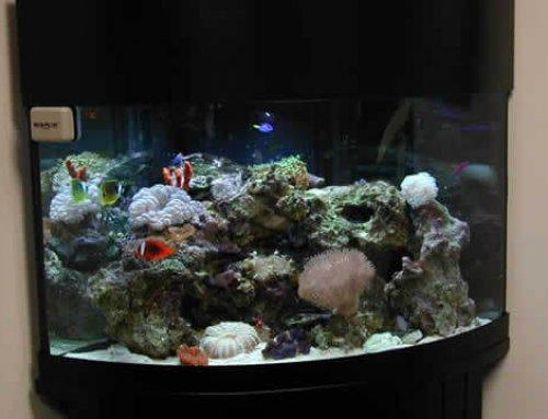 Best Light for a Reef Tank 2018