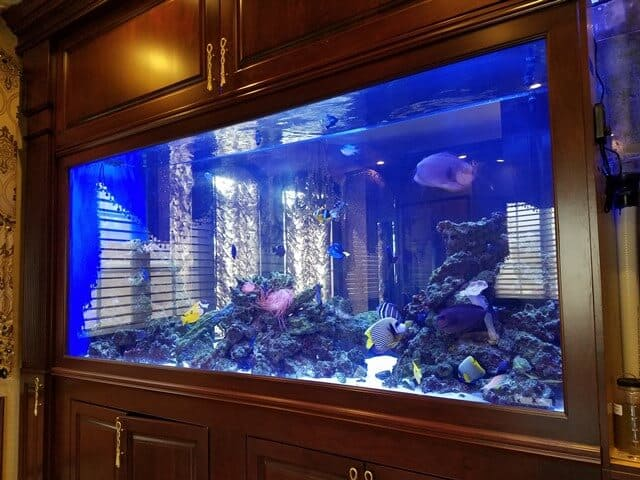 600 gallon aquarium long island