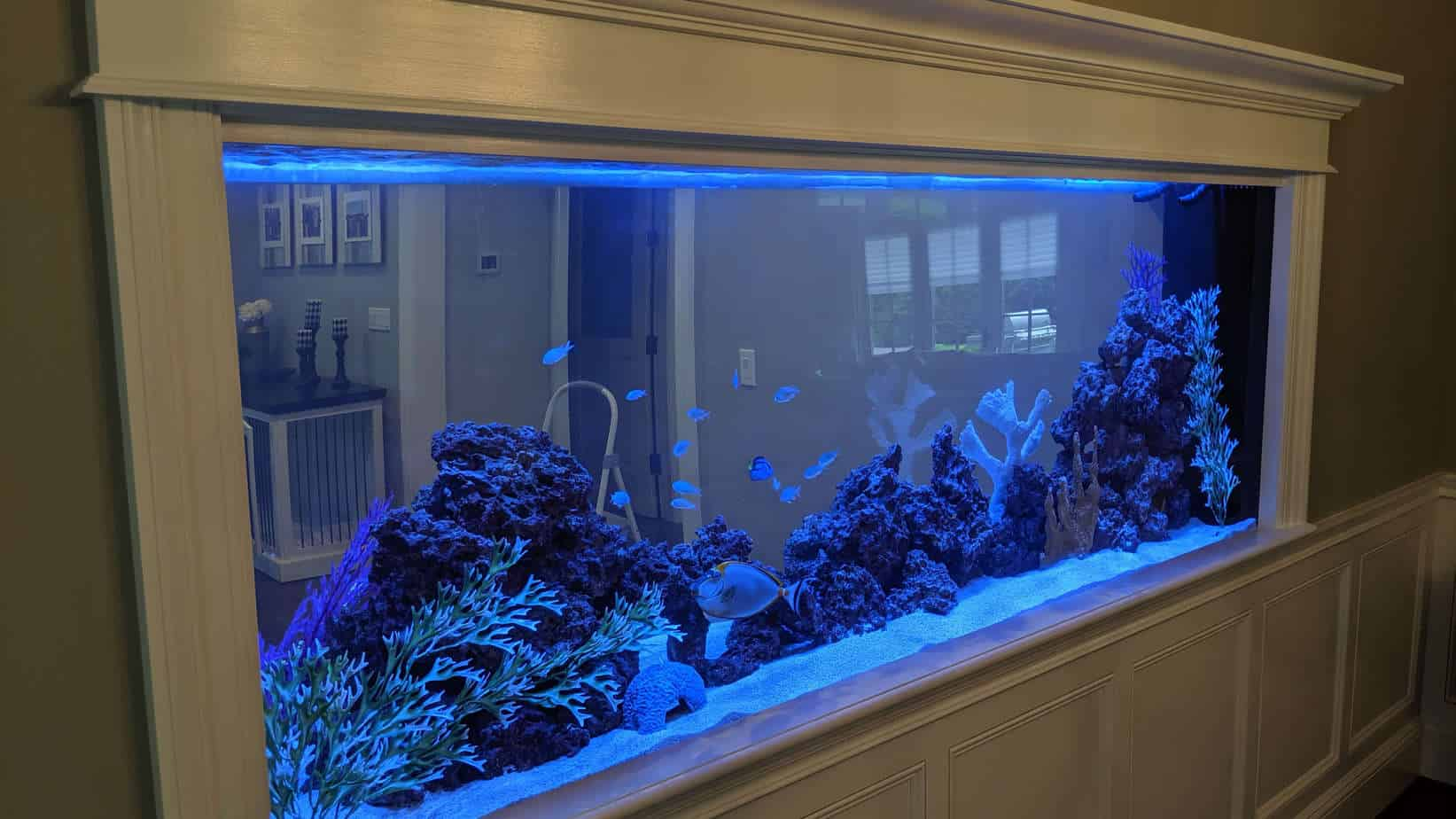 360 gallon See-Through aquarium