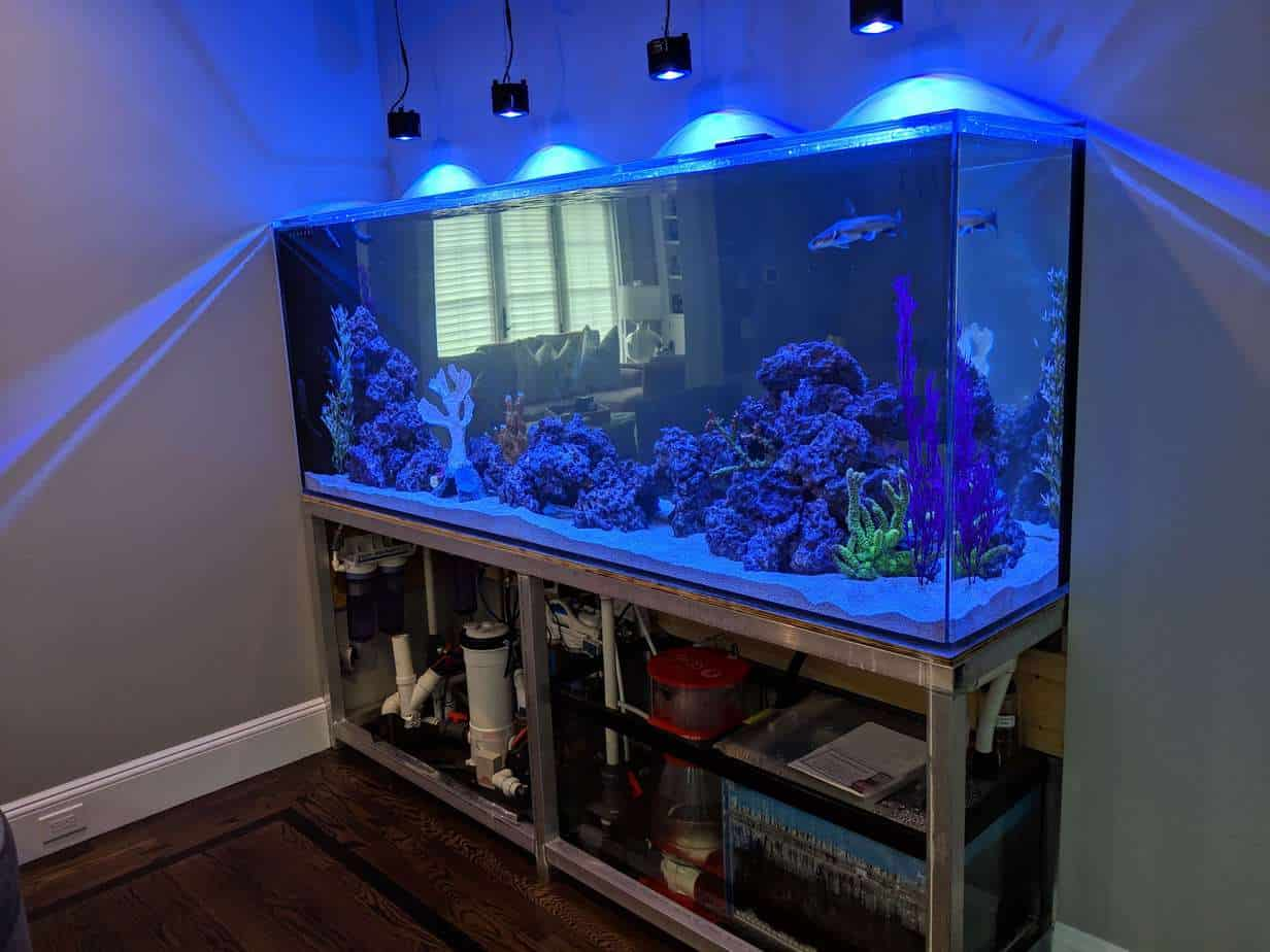 Kessil lighting hanging from ceiling