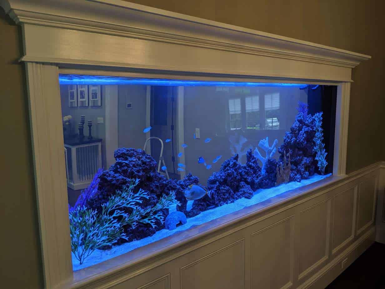360 gallon See-Through aquarium
